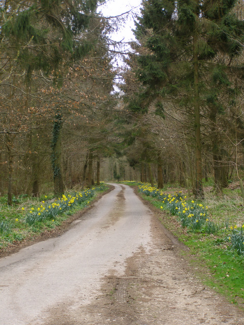 Lane entering the Hampton Plantations