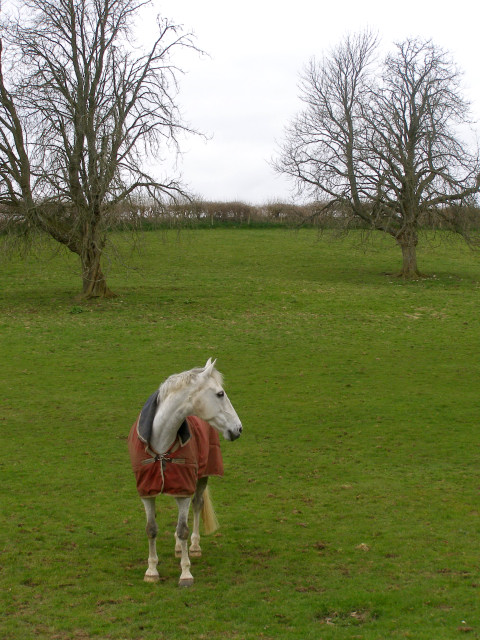 Horse near Pigeon House