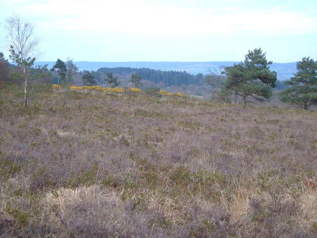 Aylesbeare Common