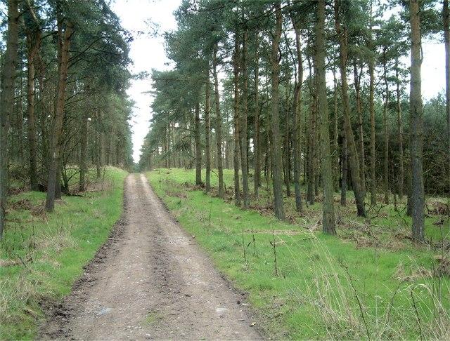Lochmuir Wood