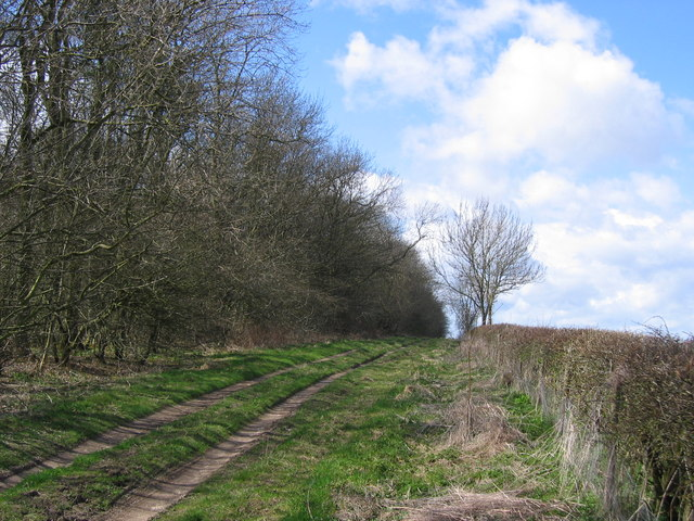 Bridleway - Fox Covert Plantation