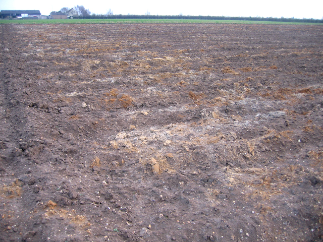 Peat wastage, Black Bush, Whittlesey, Cambs