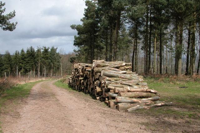 Blakemere Hill Wood
