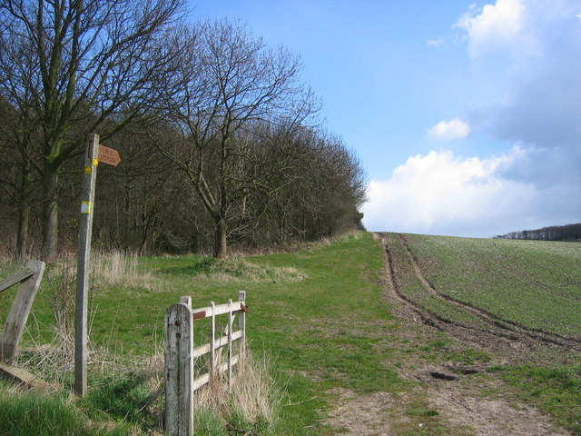 West Lawn Wood