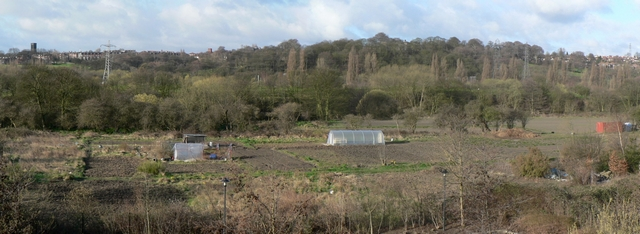 Allotments between Kirkstall Road & River Aire
