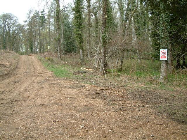 Blagdon Hill Wood