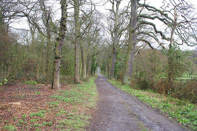 Swithland Wood, Leicestershire