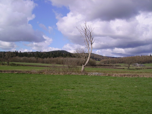 Tree near Cartmel