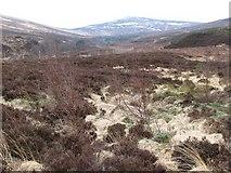 NN5252 : Newly planted forestry by Callum Black
