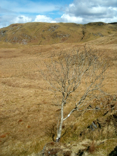 Solitary tree on moorland