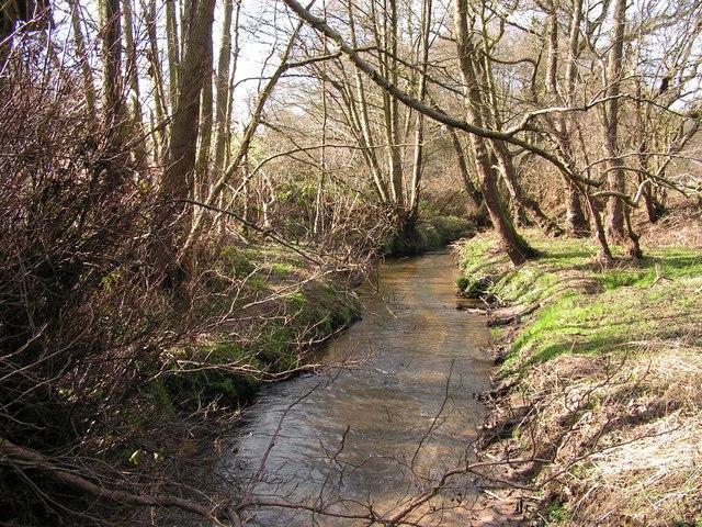 Woods & Stream