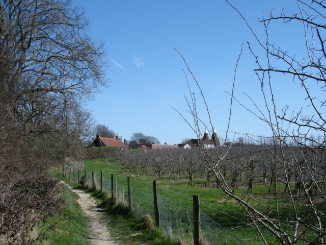 Footpath and apple orchard Icklesham East Sussex