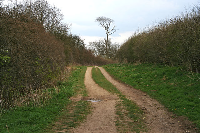 Short Hollow near Braceby