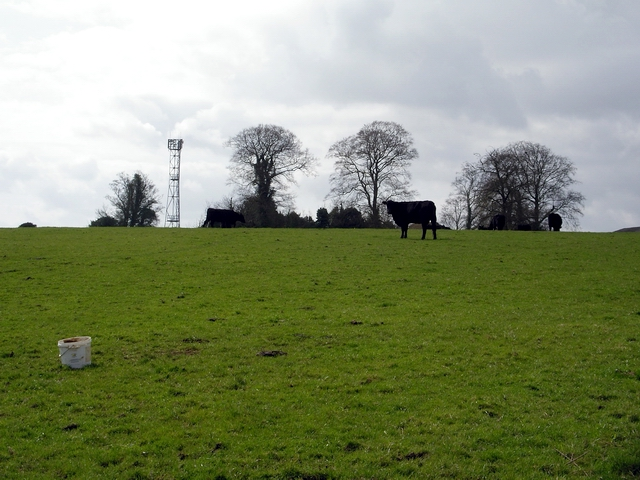 Field, phone mast and cows