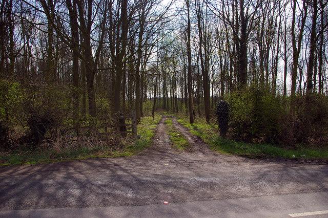 Irongate Wood