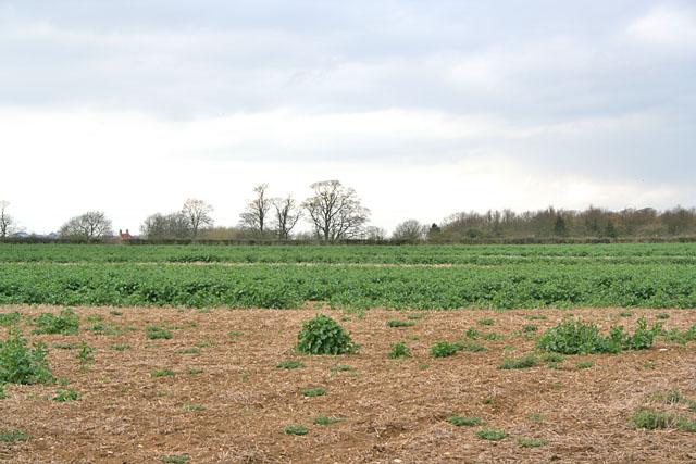 Farmland near Sapperton and Braceby