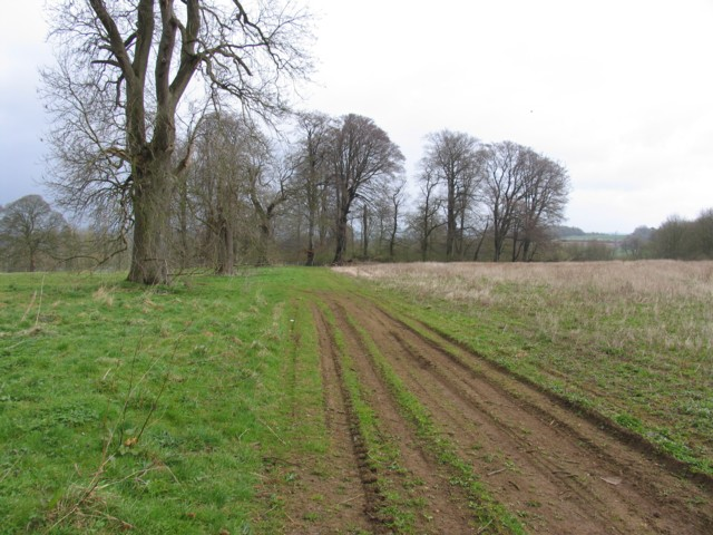 Muddy track and trees