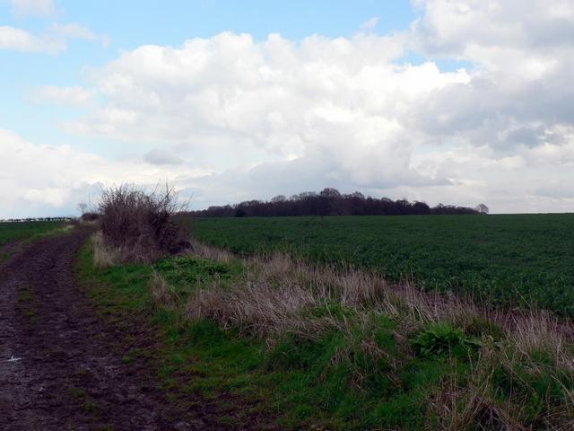 Roman Road, Bardsey
