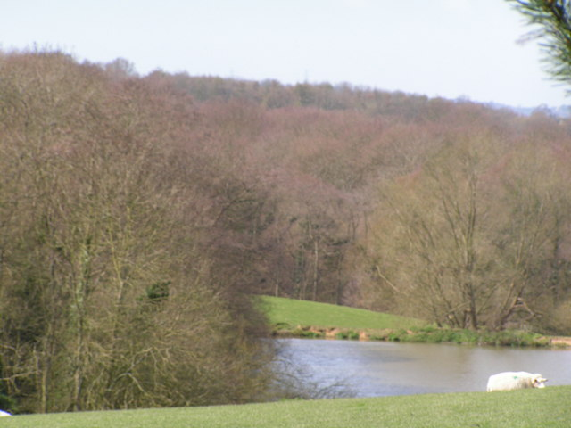 Pond woods, with a pond & sheep in the foreground