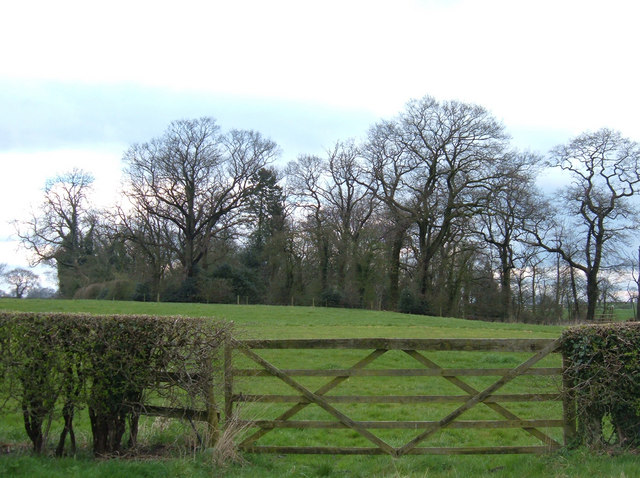 Copse of Elms, near Marton