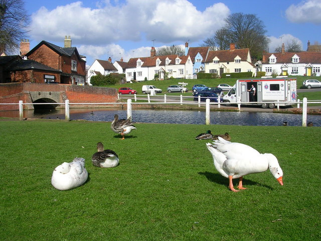 Ducks and Geese at Finchingfield