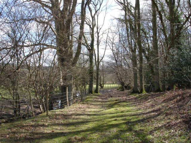 Birch Wood Beckley Furnace East Sussex