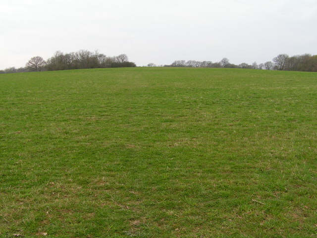 Fields with woodland behind