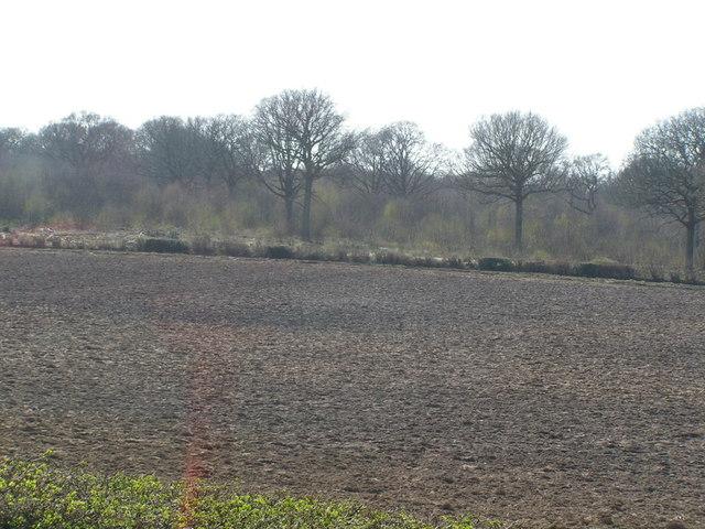 Ploughed field &  Plashett woodland