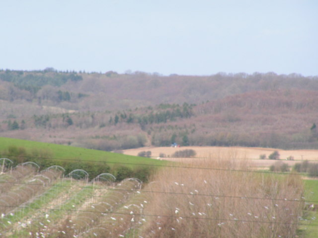 South Sowden wood across the Brede valley