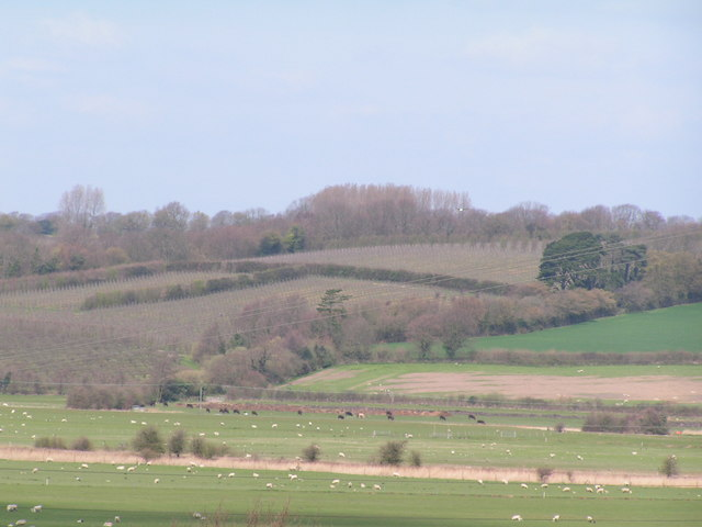 Orchards across the Brede Valley