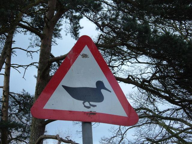 The Ducks of Hazard