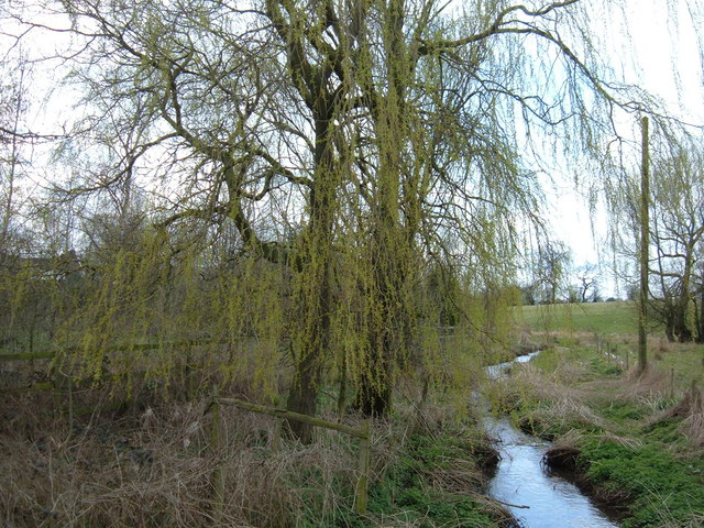 Weeping Willow Wakening