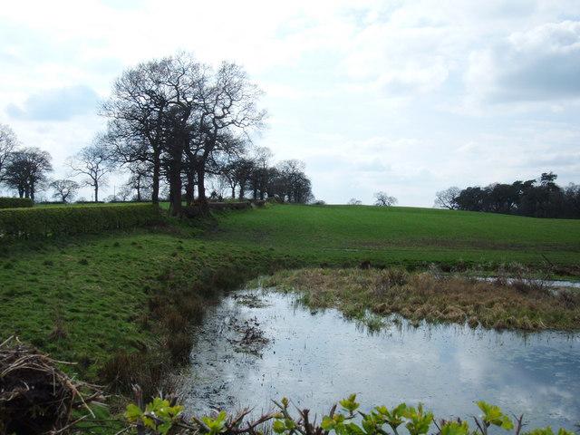 Pond near Mere Moss