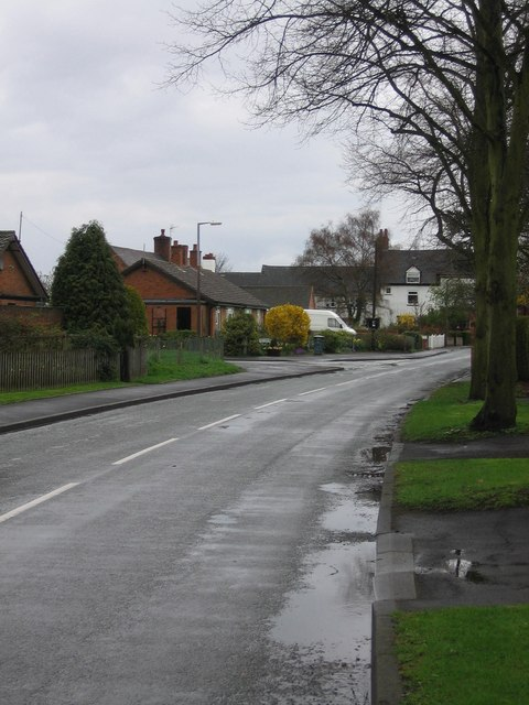 Tree-lined road in Elford