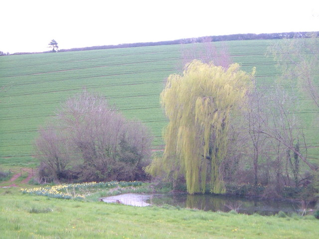 Pond and trees, Bowhay