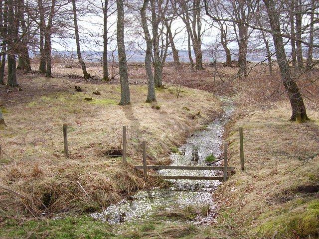 Culcraggie woodland