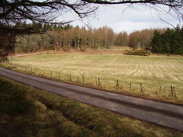 Dalreoch Wood