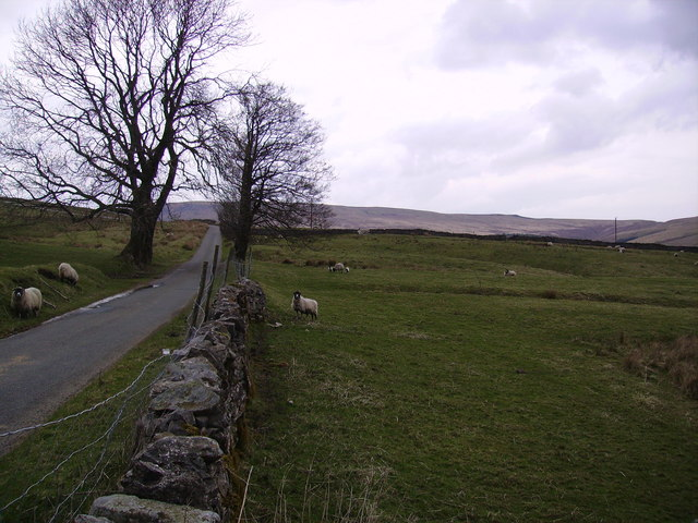 Sheep and Wall