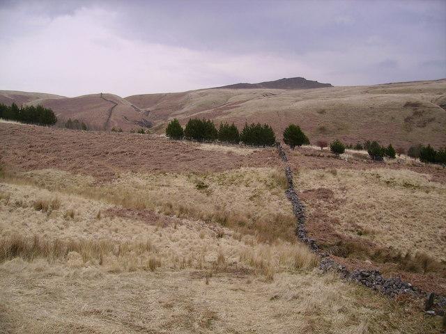 Catlow Plantation