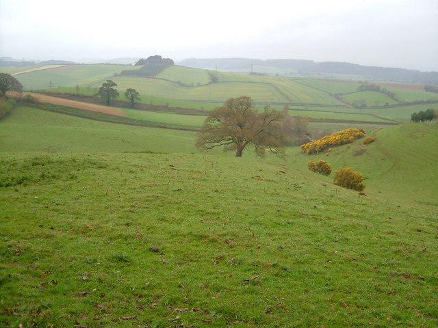 View near Kenton