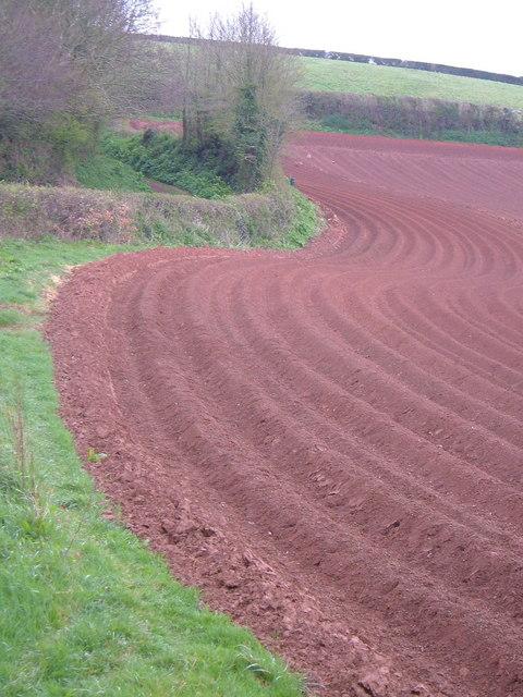 A red Devon field