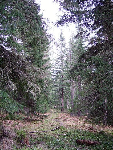 Novar Forest