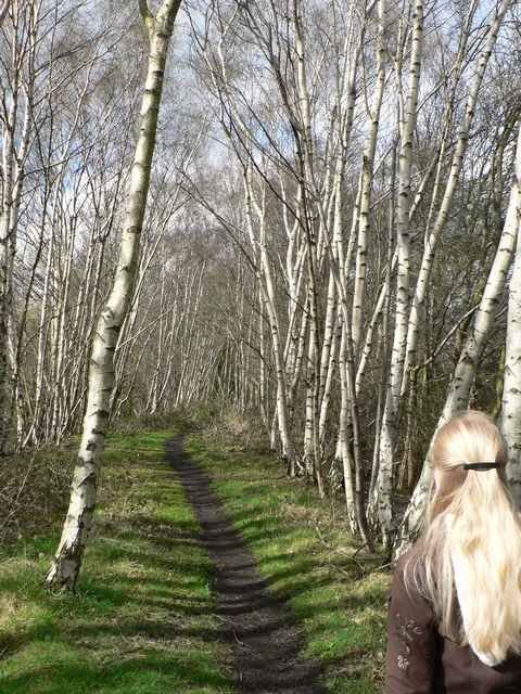 Silver Birch by the footpath, Scarcroft - Bardsey