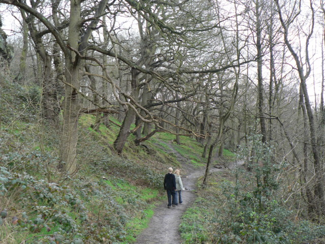 Hetchell Wood