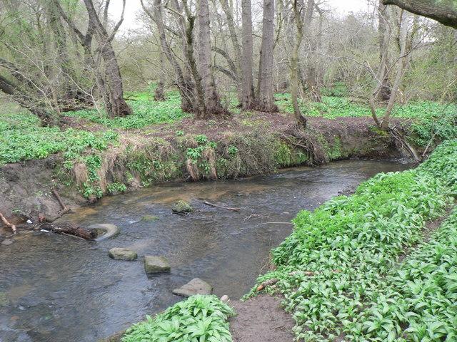 Bardsey Beck in Dam Wood