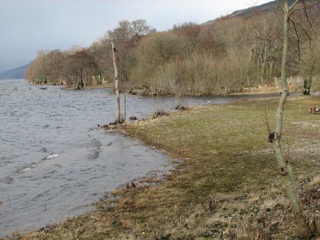 Loch shore at Ardtalnaig