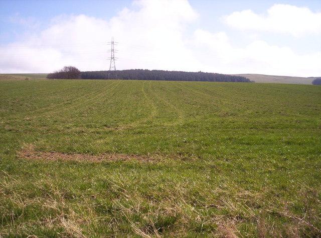 Grassy Field and Hill of Garvock