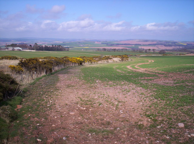 Field with Gorse Bushes in Bloom