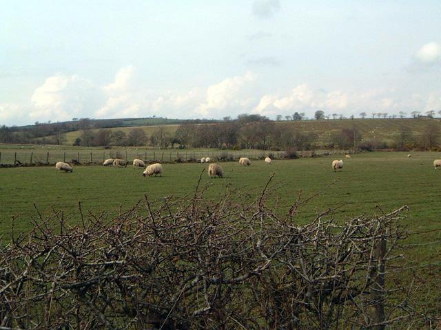 Farmland, Sykehead