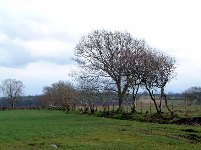 Fields, Sykehead